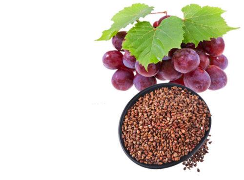 5 Tác dụng của cao hạt nho đối với sức khỏe